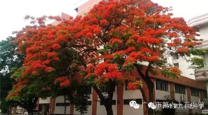 新高三,新征程,新辉煌   广州市第六十五中学2018年准高三期末考试喜报